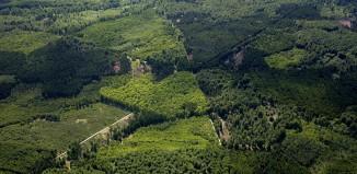 la riserva di caccia Dyrehave e Gribskov