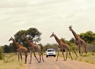 Una strada del Kruger National Park