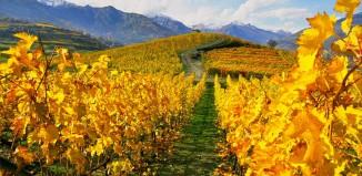 Vins Extrêmes 2015, il meglio dei vini d'alta quota