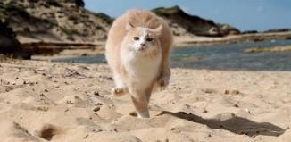 La colonia felina di Su Pallosu ha ottenuto il certificato di eccellenza di Tripadvisor ed è tra le attrazioni top della Sardegna