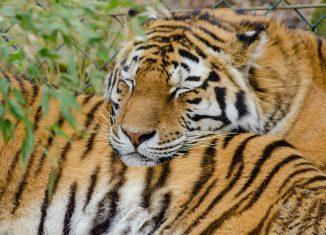 Centinaia di attrazioni che coinvolgono animali non saranno più prenotabili tramite TripAdvisor o Viator